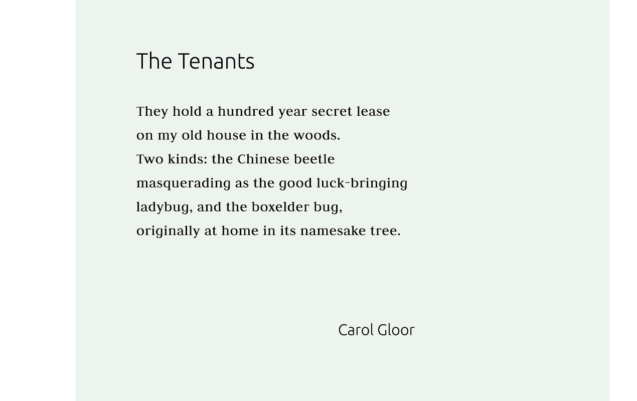 Carol Gloor carousel moved 1270x800 q95.jpg
