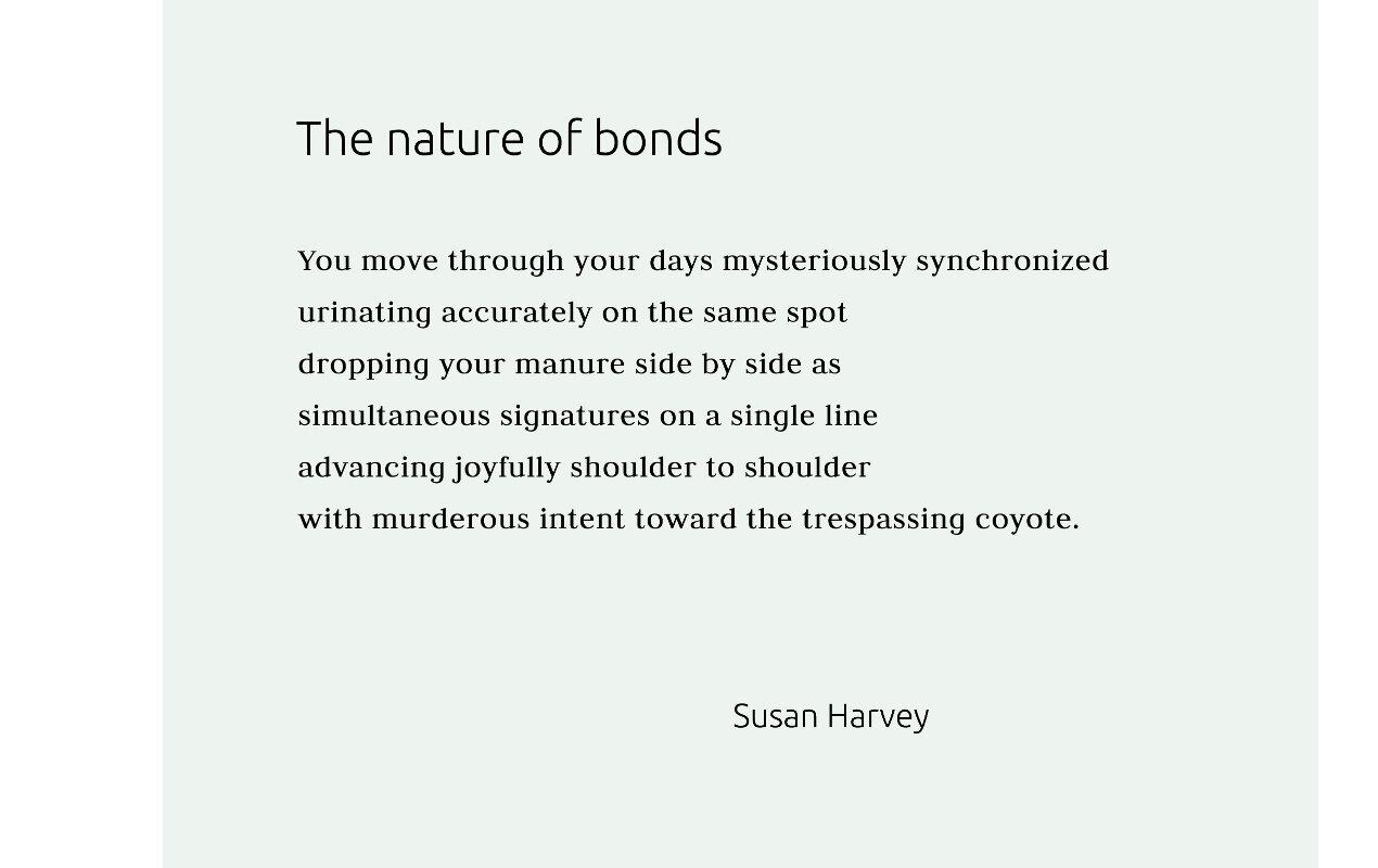 Susan harvey carousel lower  less text1270x800 q95.jpg