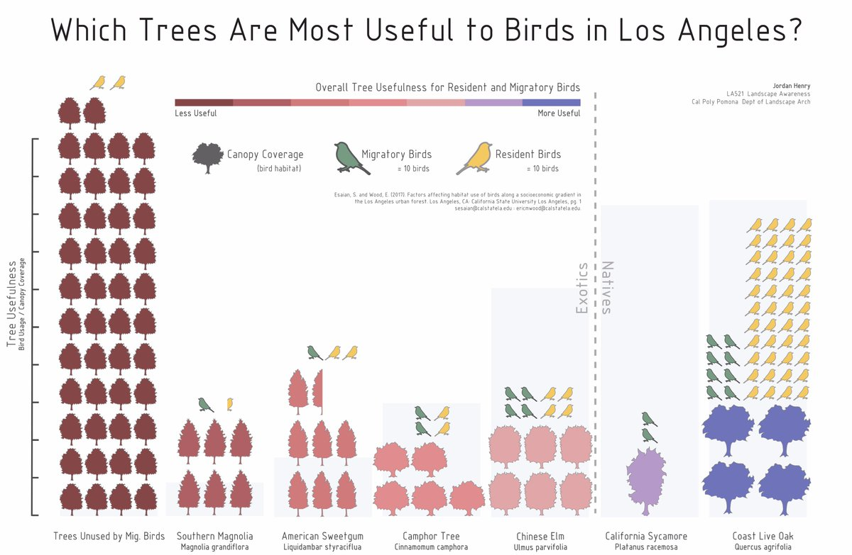 An important contribution of Sevan's work was in understanding street tree-species preferences by birds. Native trees, such as the Coast Live Oak (Quercus agrifolia) are preferred by birds. Though, there are a handful of exotic trees that are also valuable foraging substrates for birds. Poster by Jordan Henry, Cal Poly Pomona.
