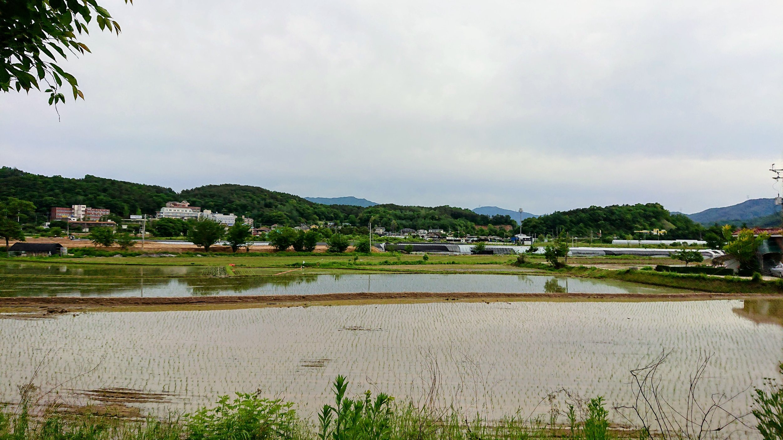 Rice is the most valuable crop in South Korea, and used to represent 90 percent of all grain production, and over 40 percent of farm income.