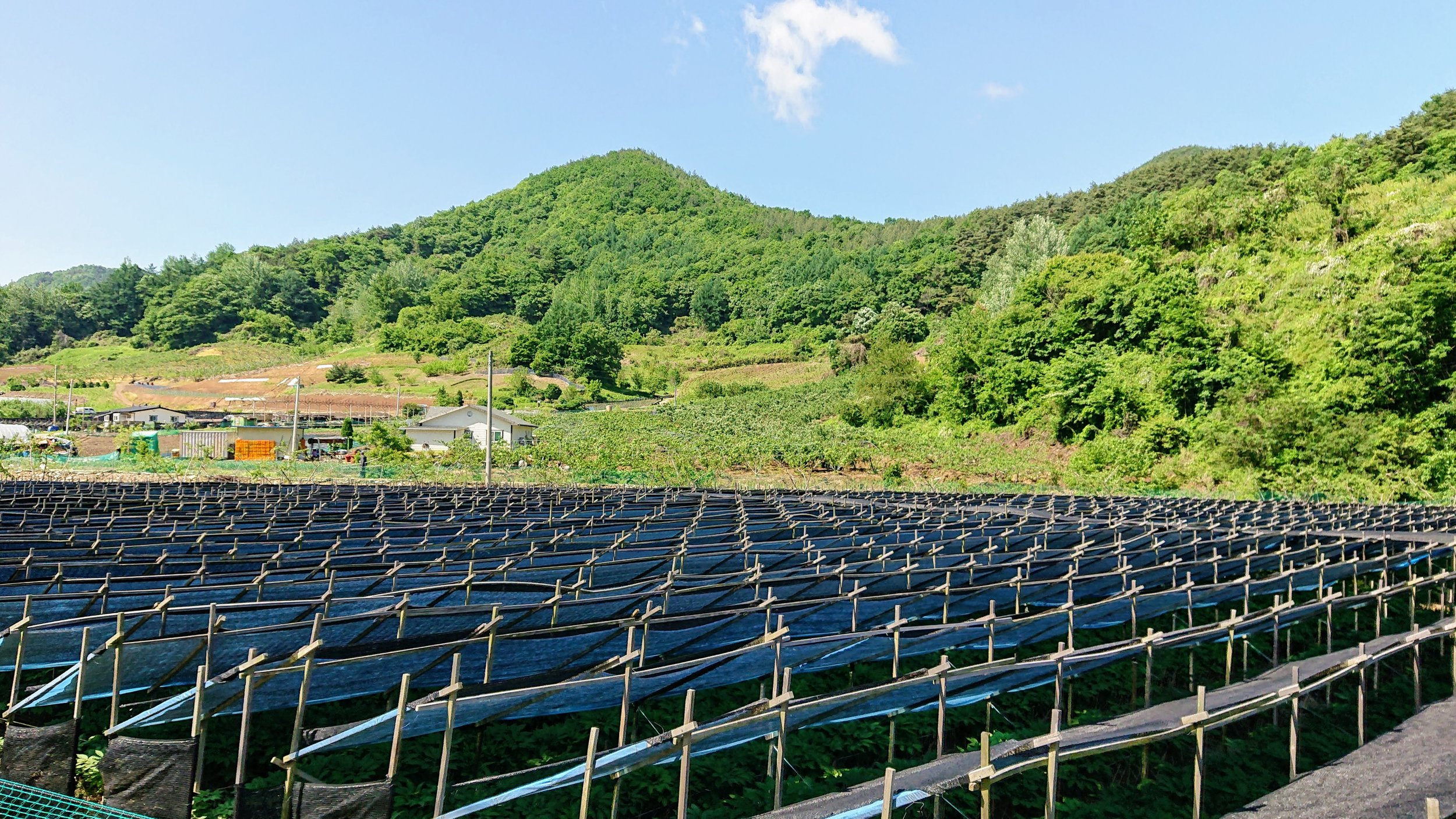 At first, we thought these were solar panels. Upon closer inspection, we realised that it was shade for the crops that had been built by hand.