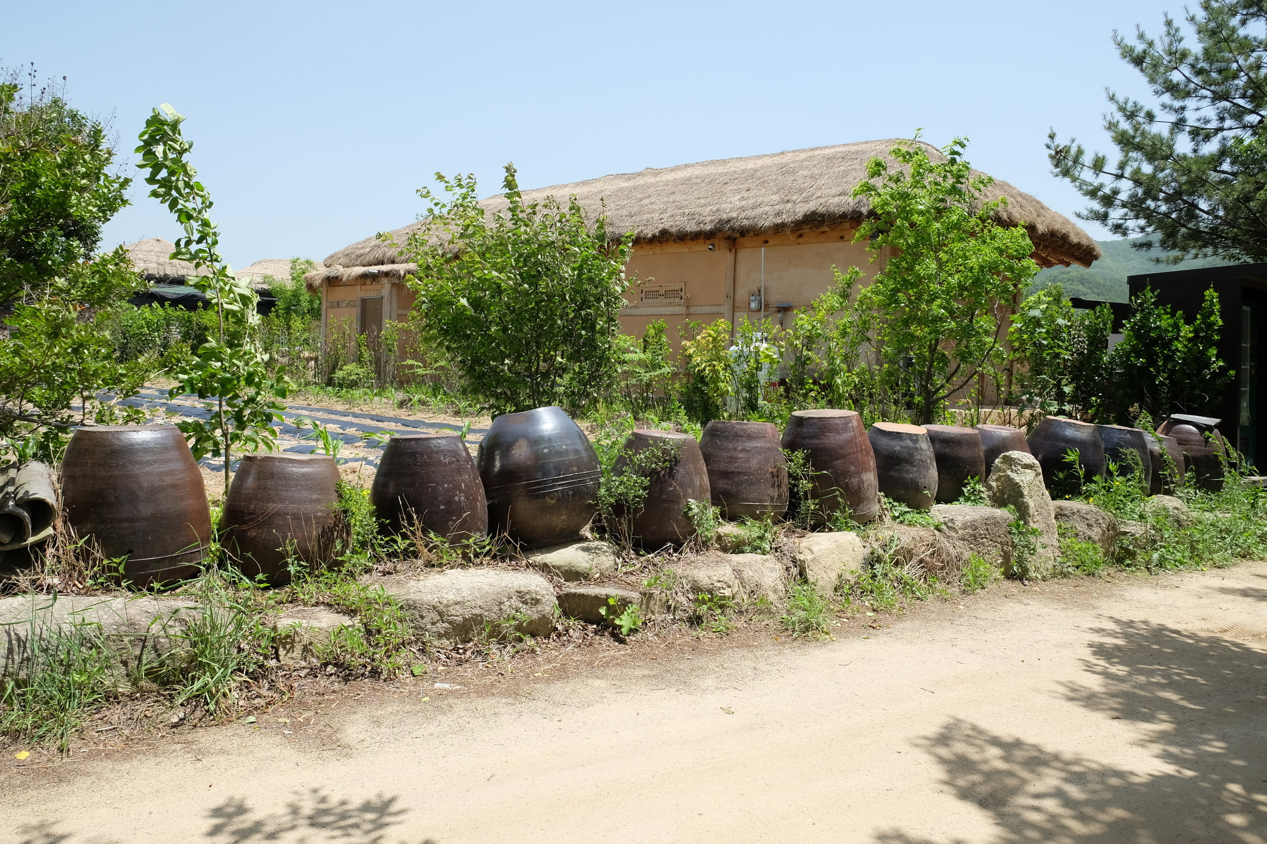 Earthen pots filled with pickled goodness. Jess remembers her grandmother using them to store kimchi and soybean paste.