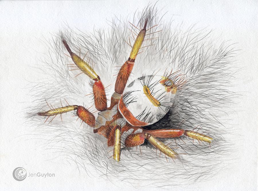 Bat fly, Nycteribiidae. 2013.