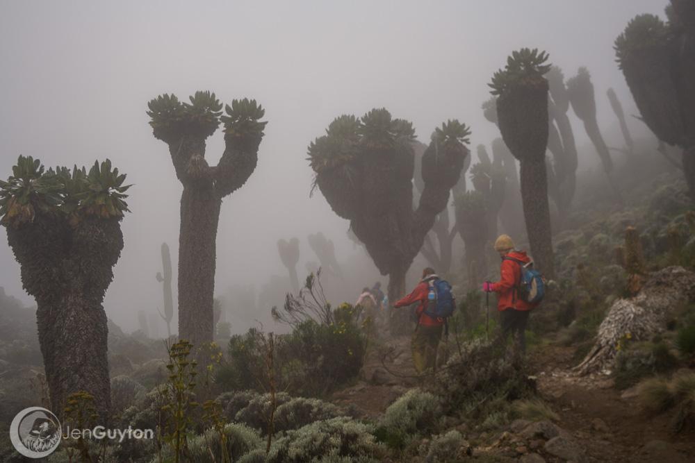 Kilimanjaro185.jpg