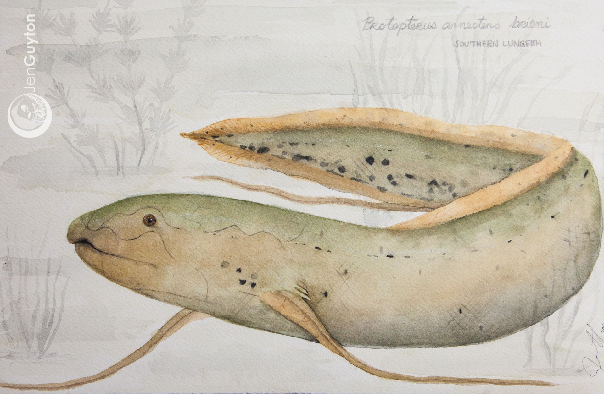 Southern Lungfish