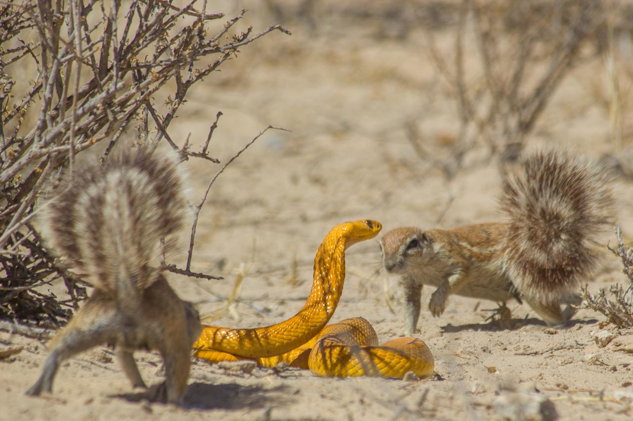 meerkats-2624.jpg