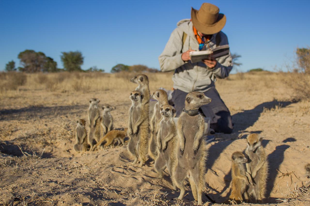 meerkats-3019.jpg