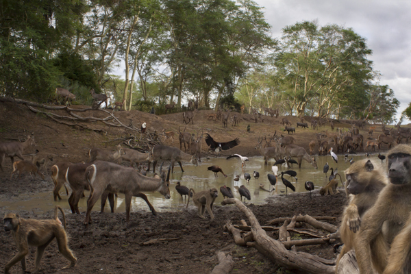 GORONGOSA NATIONAL PARK