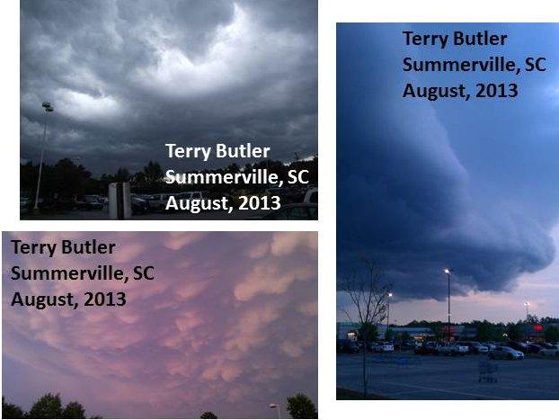 2013 223-TerryButlerSC.jpg