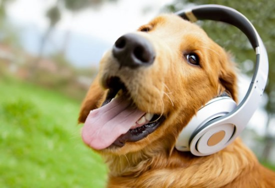 Whatcha listening to girl?