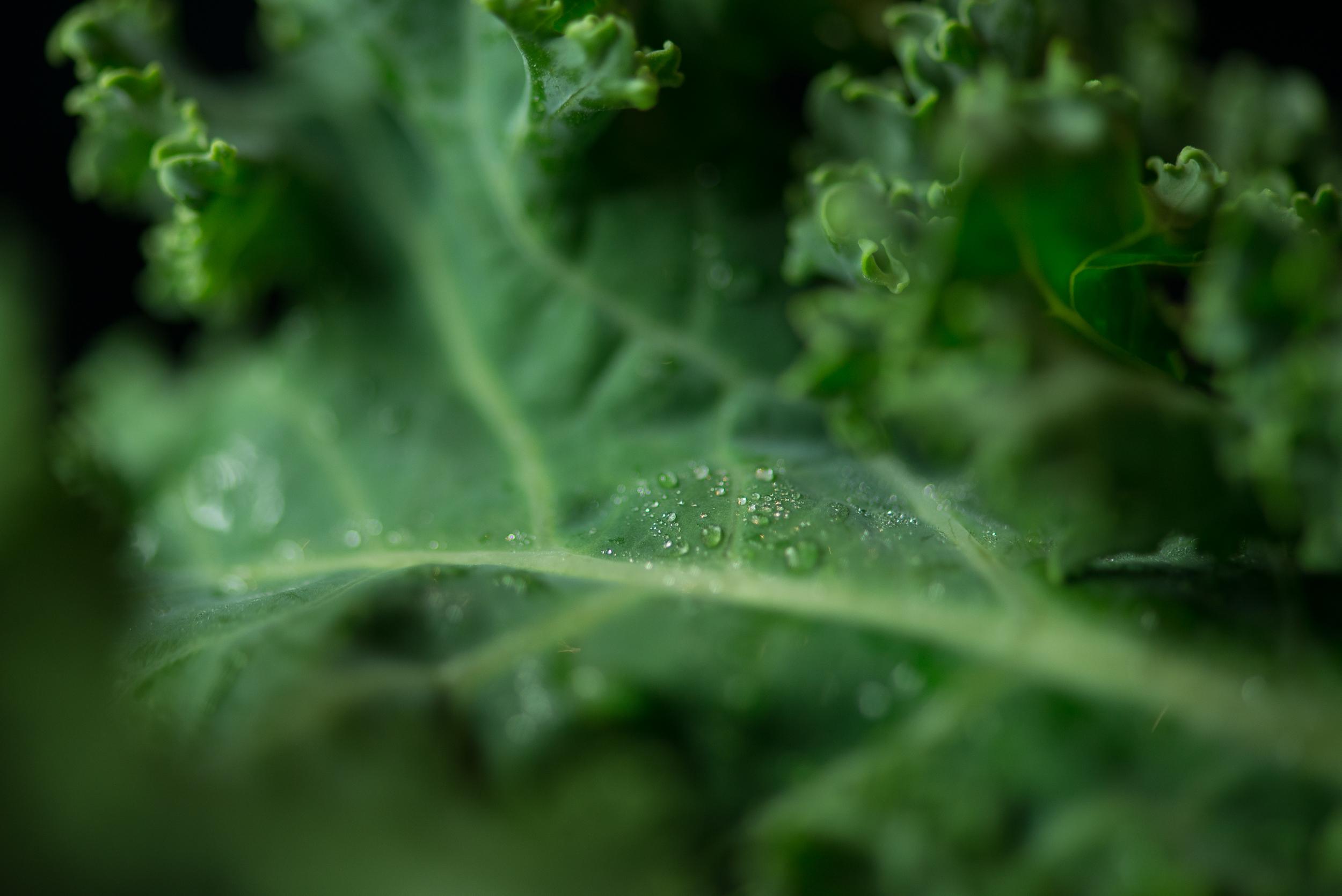 Kale, Water, Life