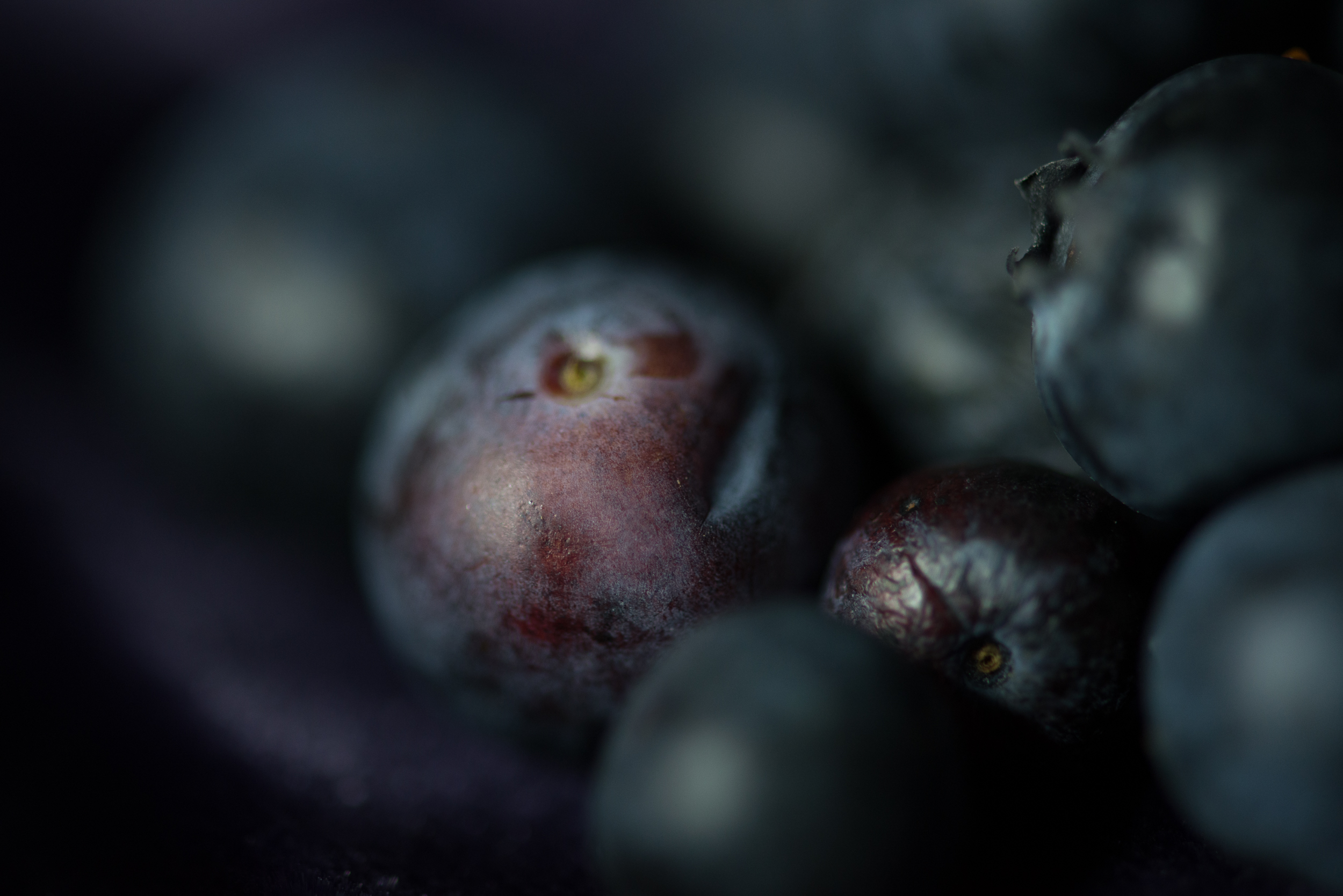 The World in a Blueberry