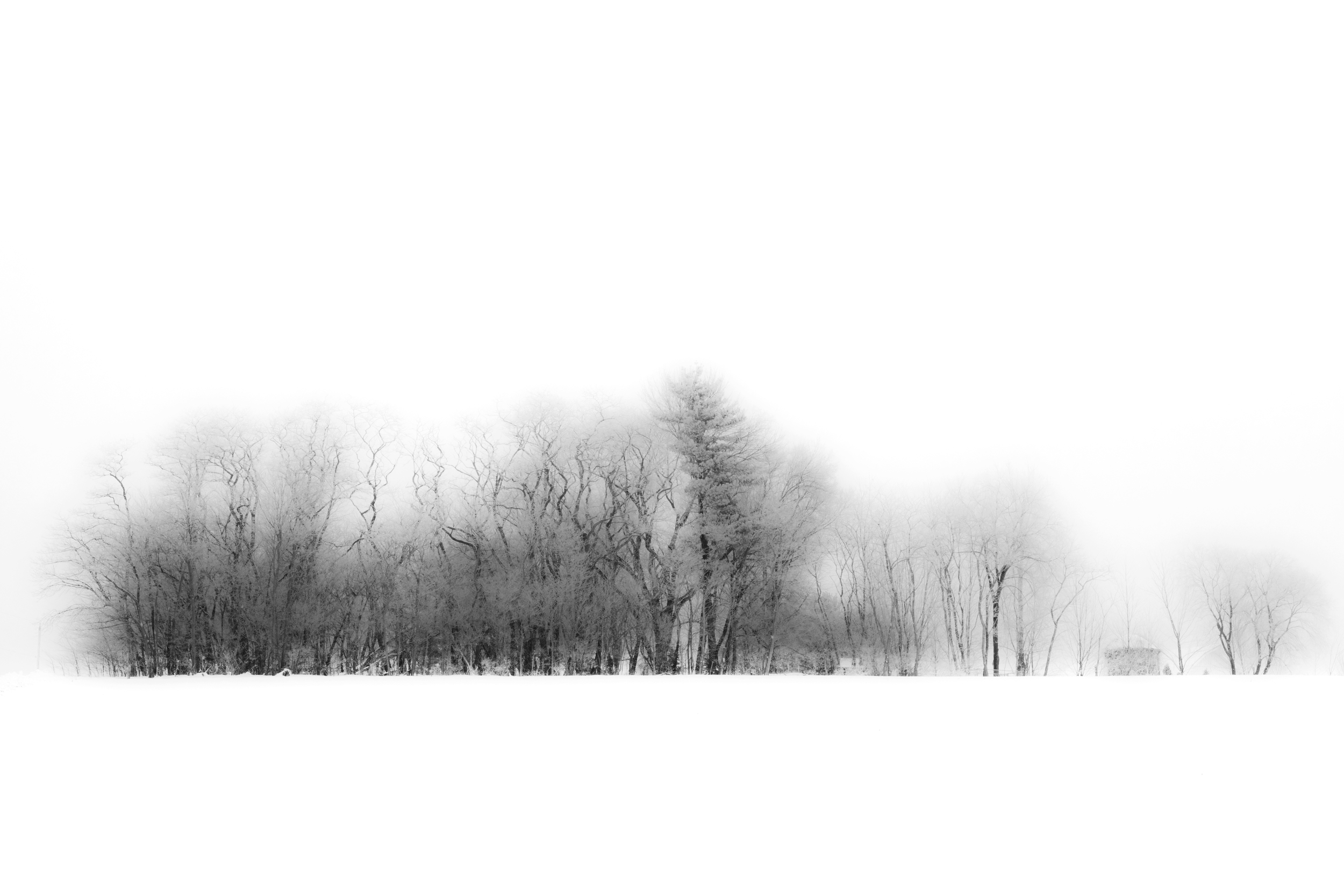 Winter Woodlot