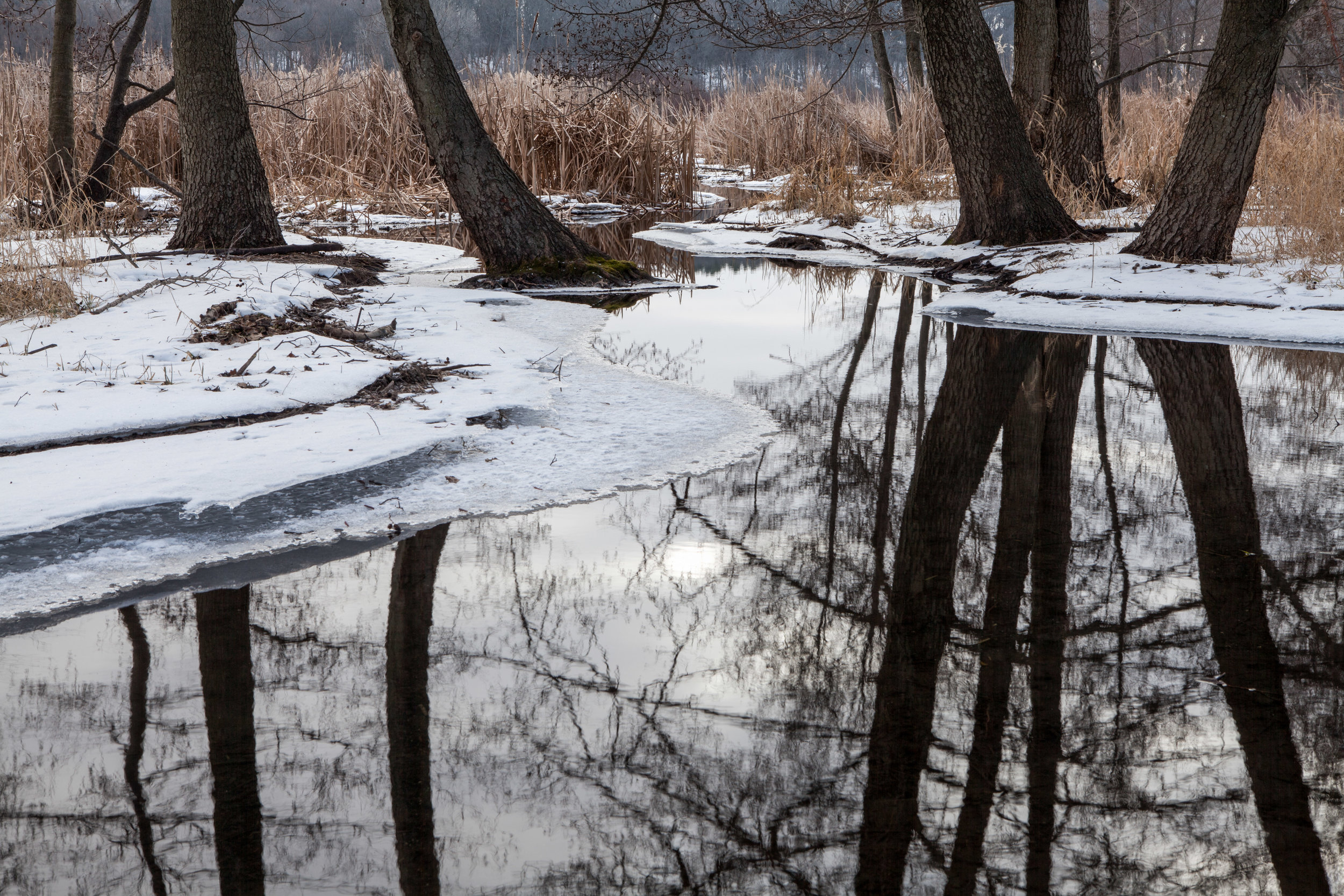 Name for Tree Reflections on Open Water in Winter