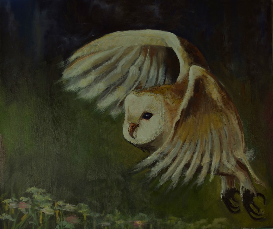 Bruno's Barn Owl