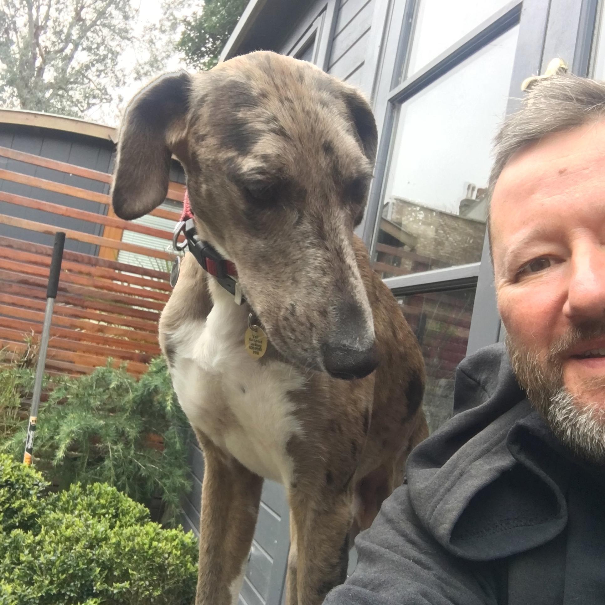 Dash-Dashington Dog