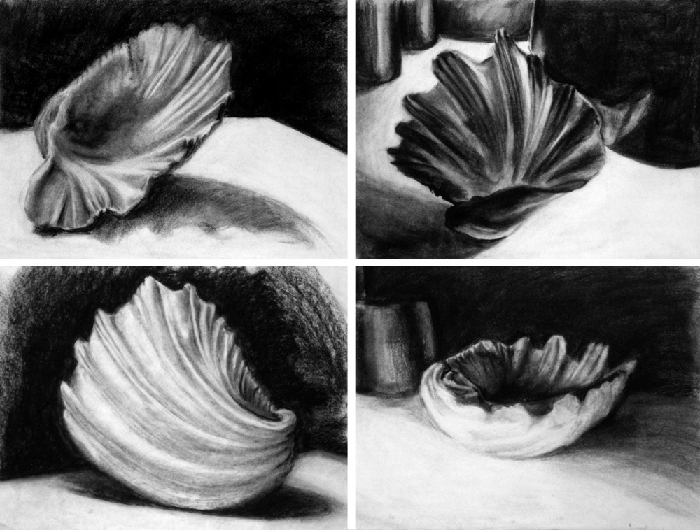 Seashell Studies