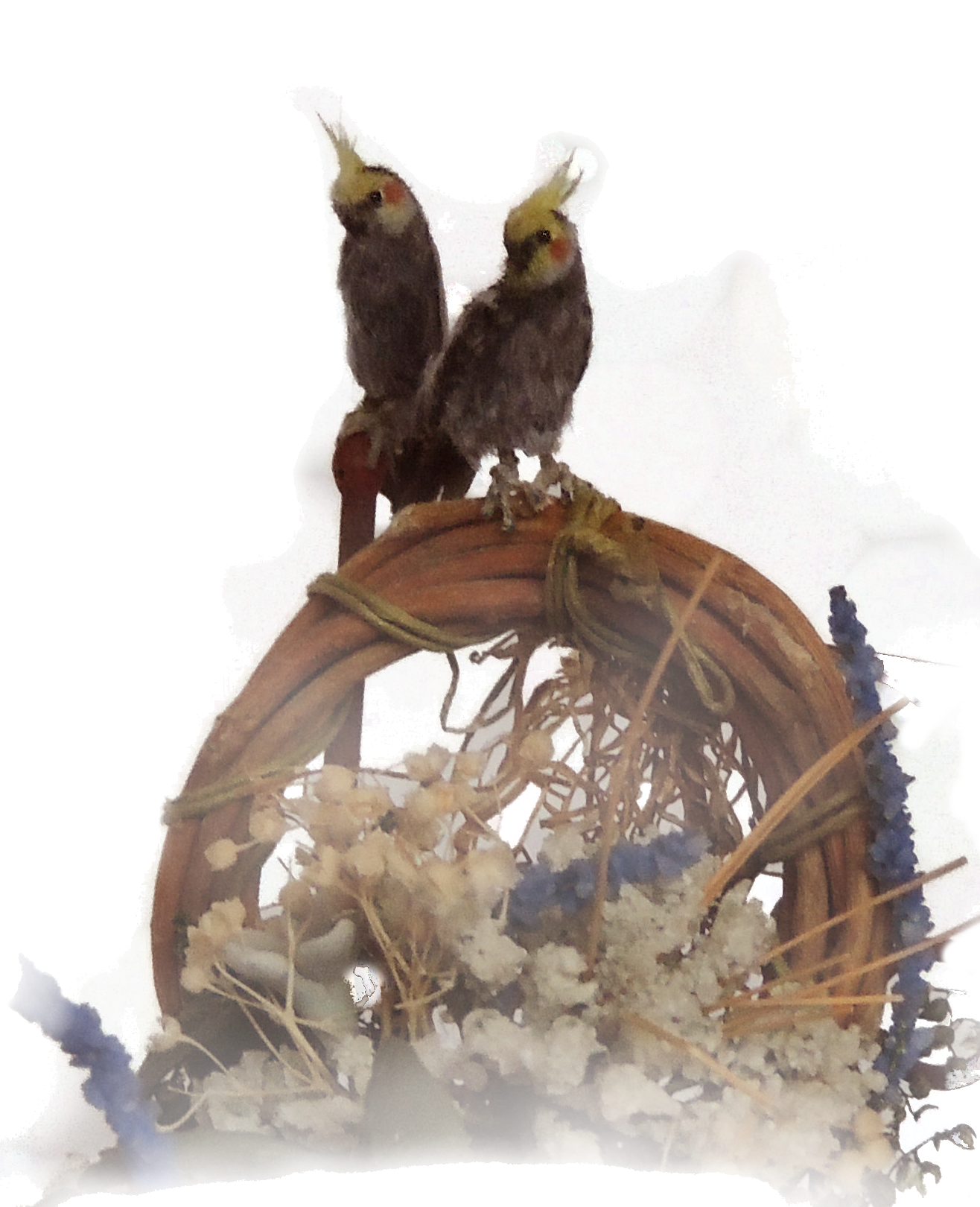 cockatiel 12th scale png.png