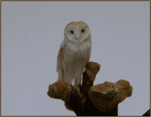miniature_barn_owl_sitting_on_a_pine_cone_by_anyastone1gb.jpg