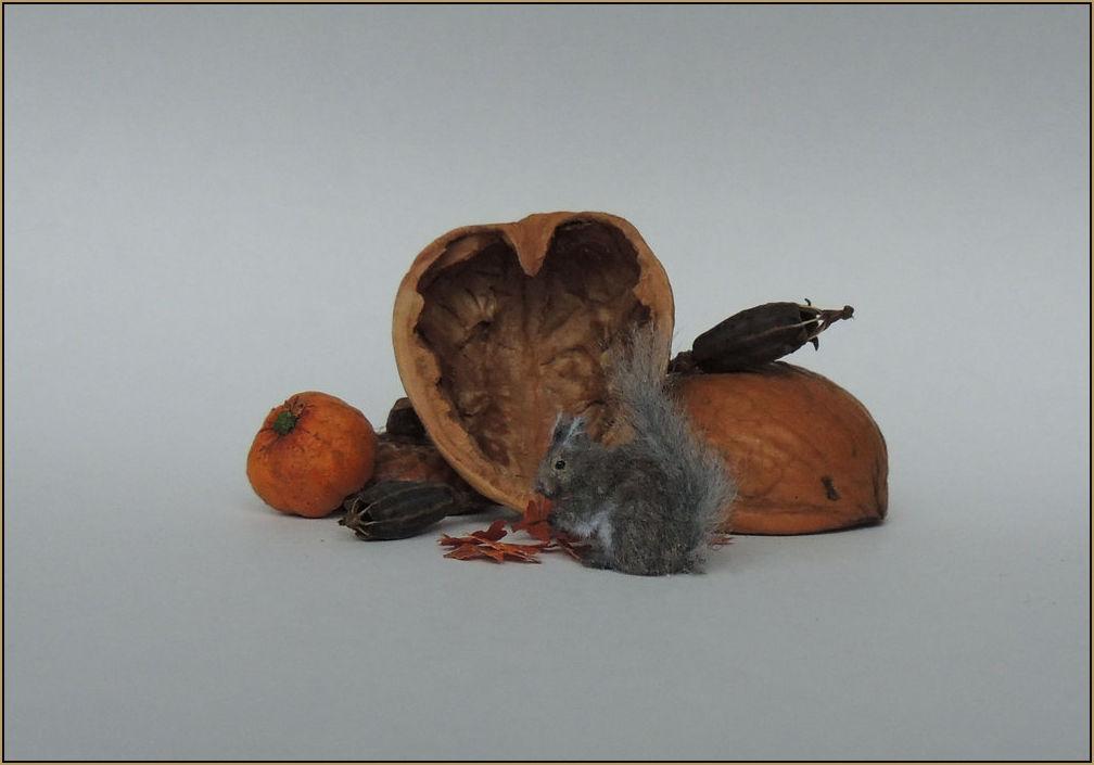 Grey squirrel gb3.jpg