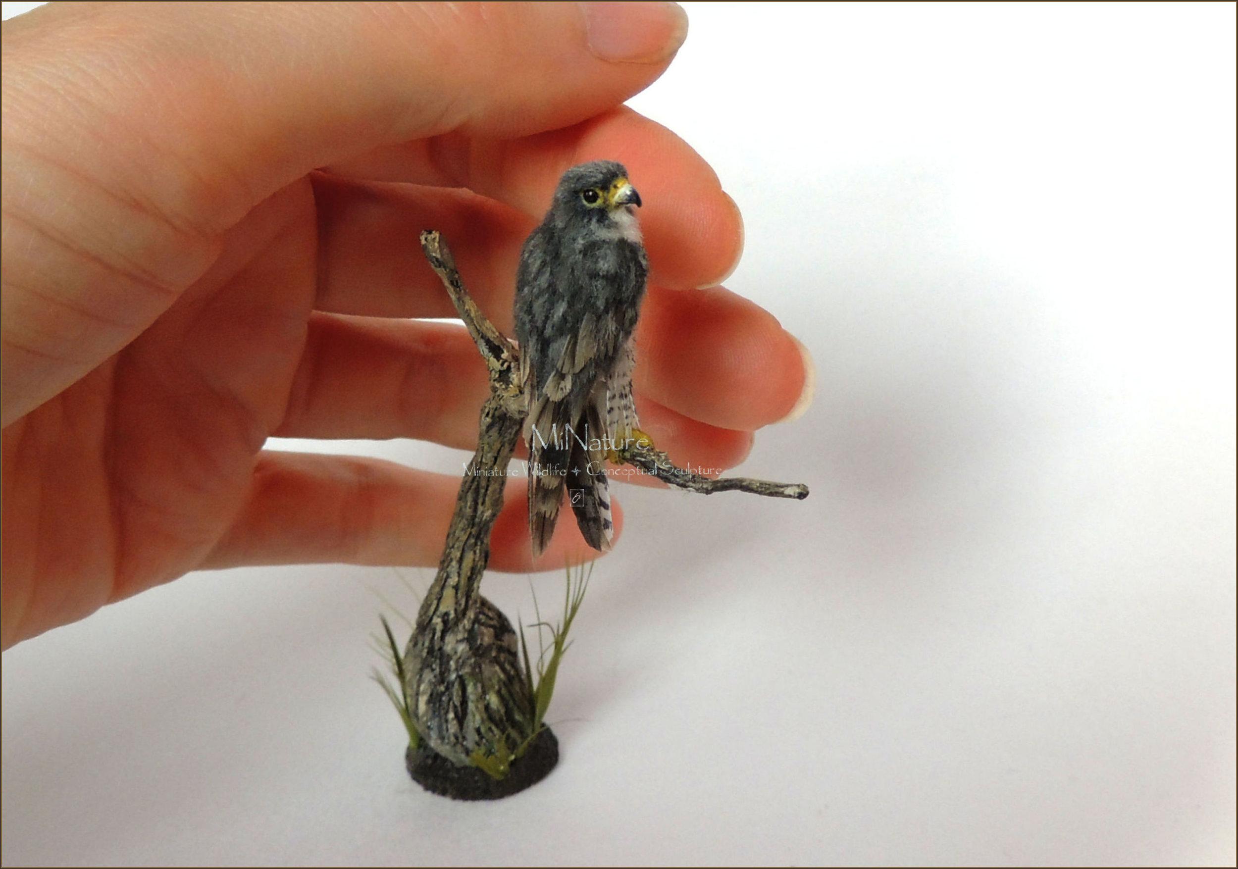 Peregrine Falcon Diorama