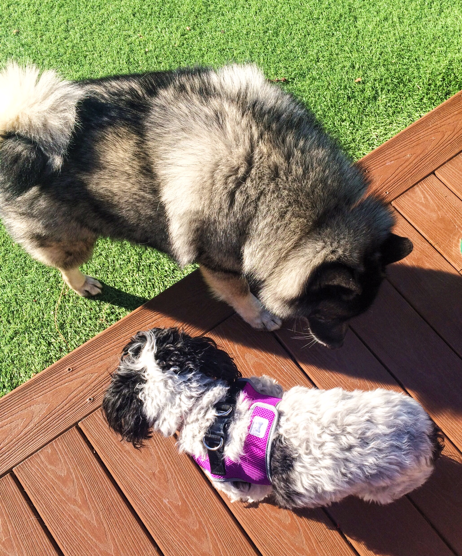 Cloe and fluffy dog