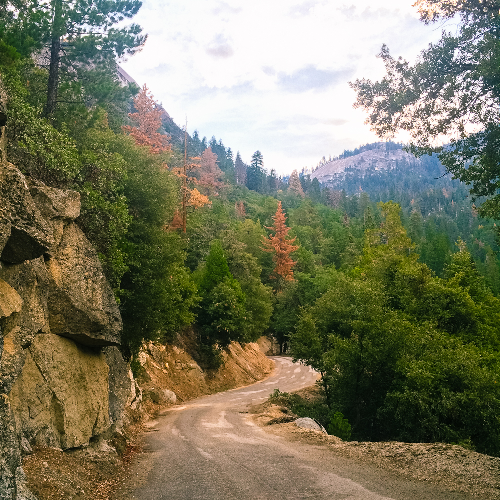 Sequoia Forest_Odaniel_IG (10 of 32).jpg