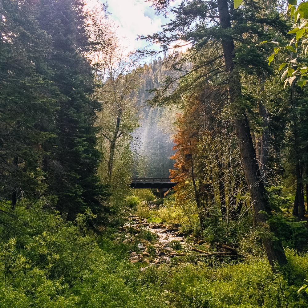 Sequoia Forest_Odaniel_IG (15 of 32).jpg