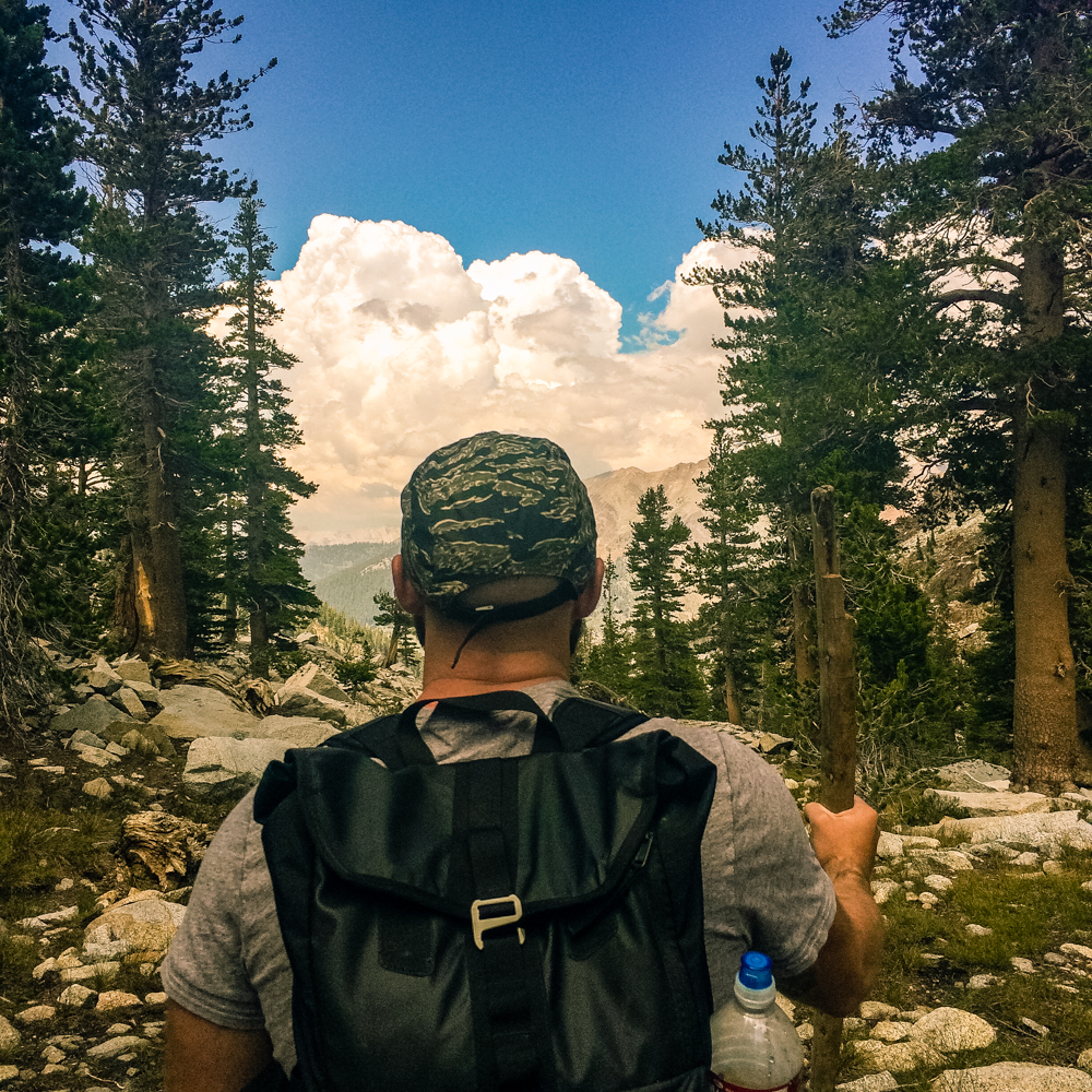 Sequoia Forest_Odaniel_IG (29 of 32).jpg