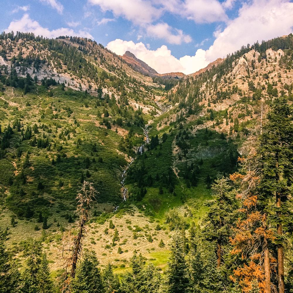 Sequoia Forest_Odaniel_IG (32 of 32).jpg