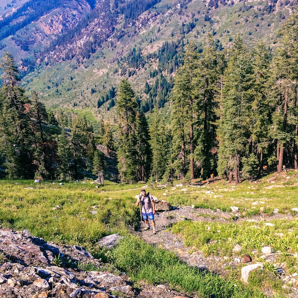 Sequoia Forest_Odaniel_IG (31 of 32).jpg
