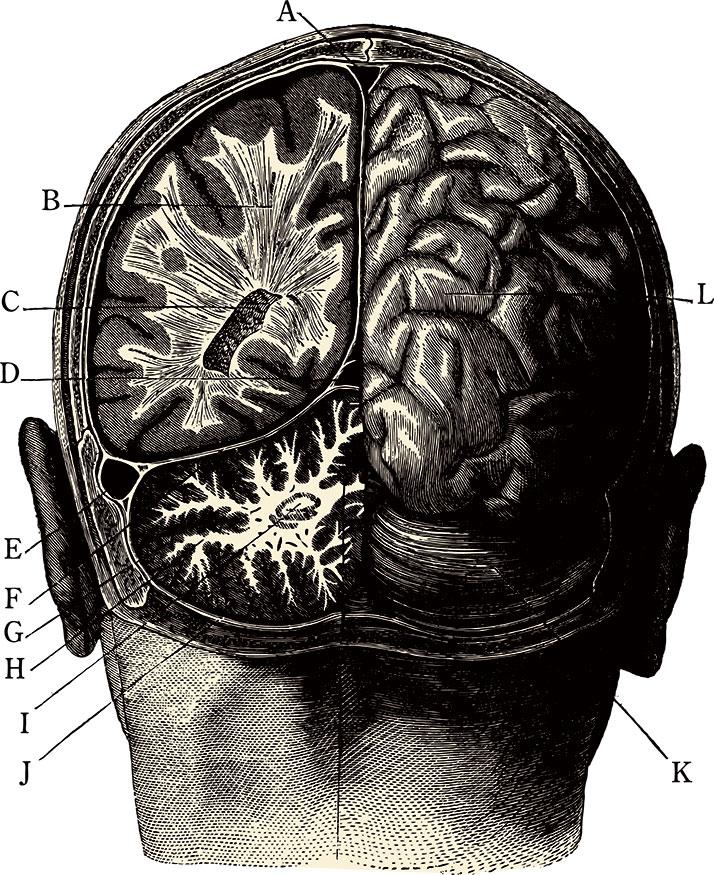 brainManillustration.jpg