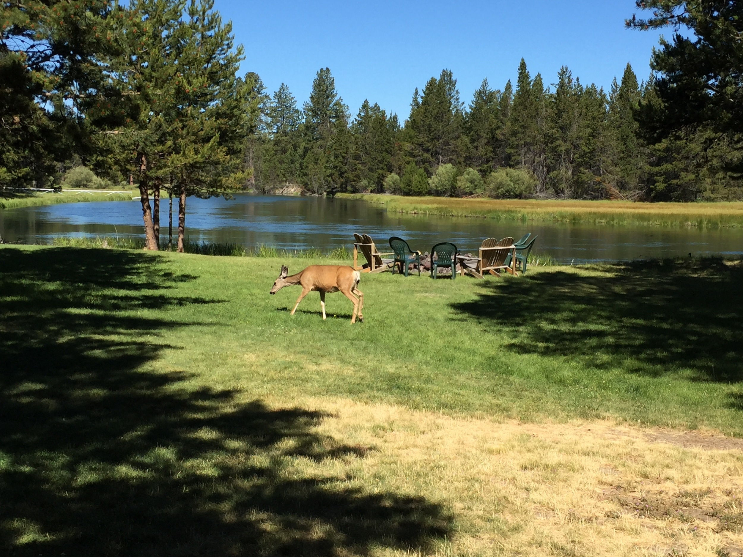 A deer family was out early every morning! We ended every night at the fire pit right by the river.