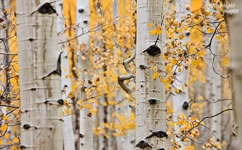 aspen_leaves.jpg