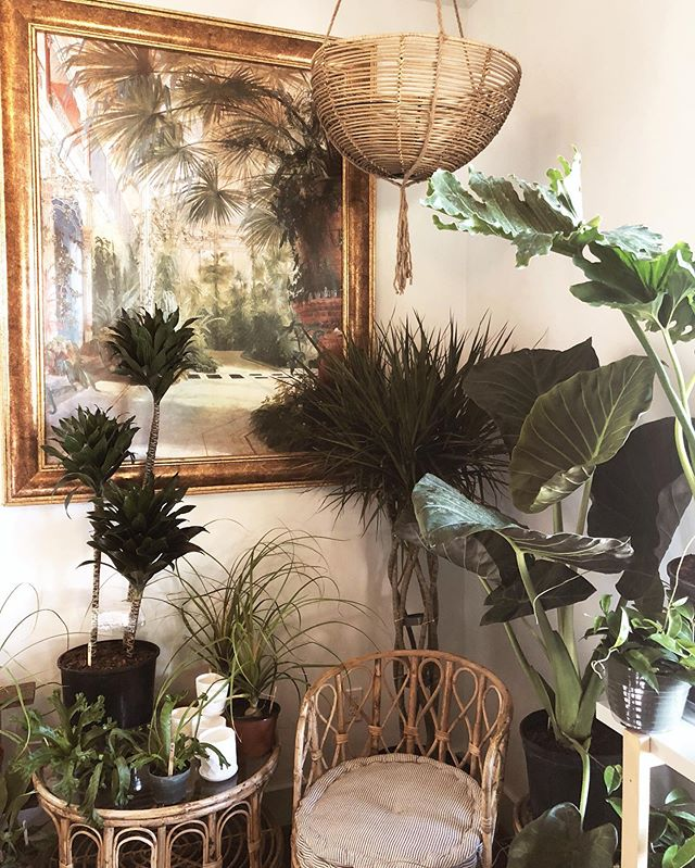 Hoping one day I can be a good enough plant mom to have a room like this 🌱 #thatdayisnottoday