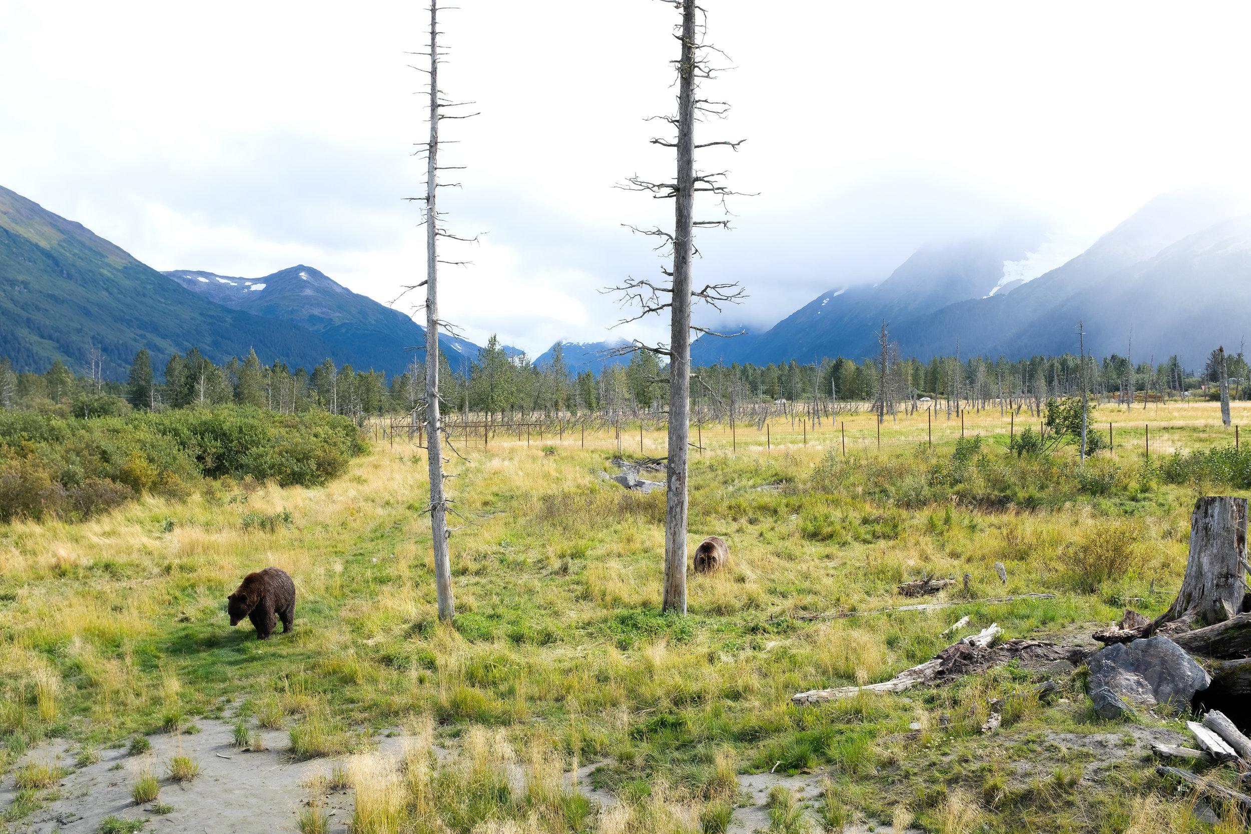 Alaska Wildlife Conservation Center, Alaska