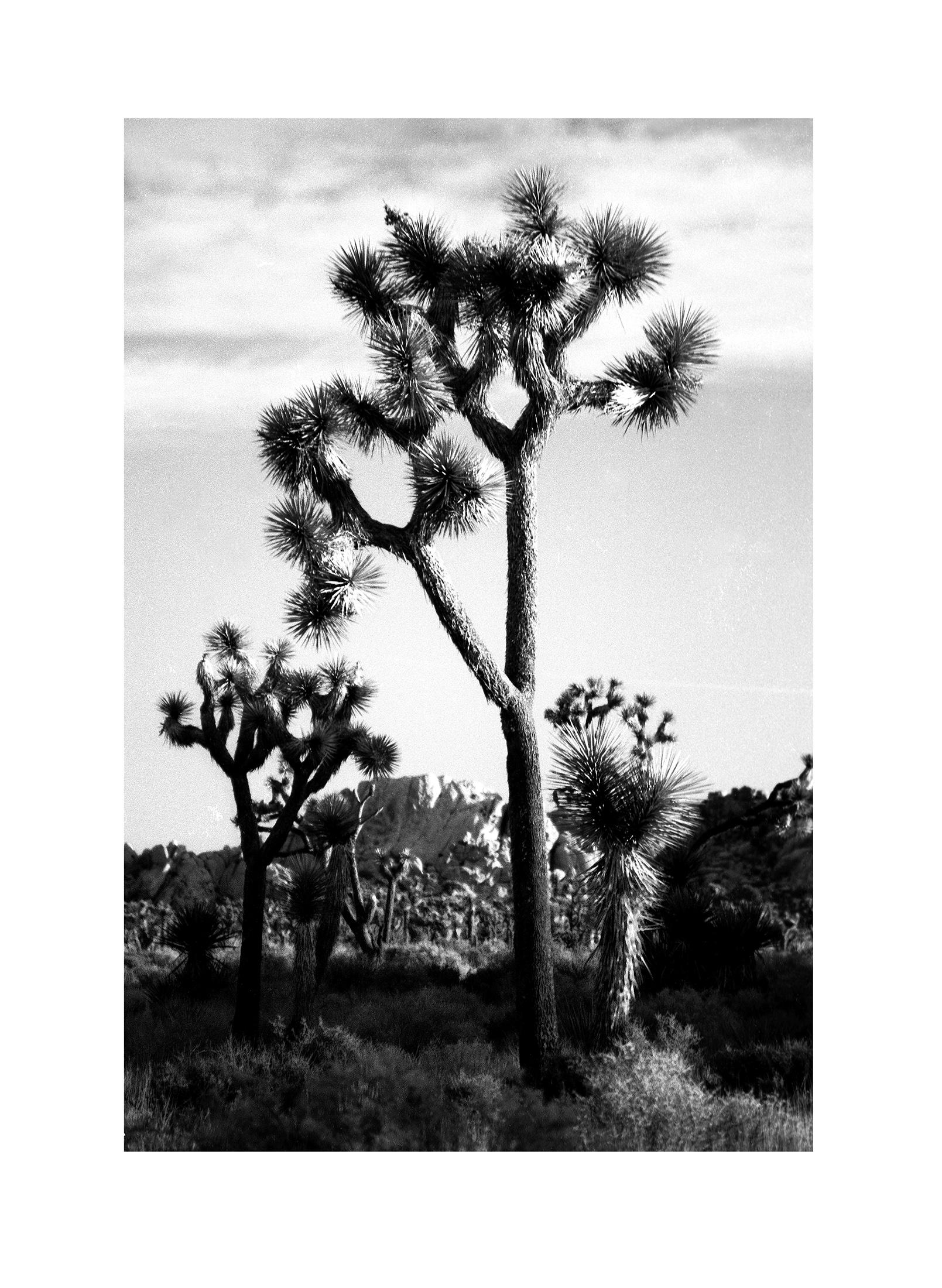 Joshua Tree NP 17.jpg