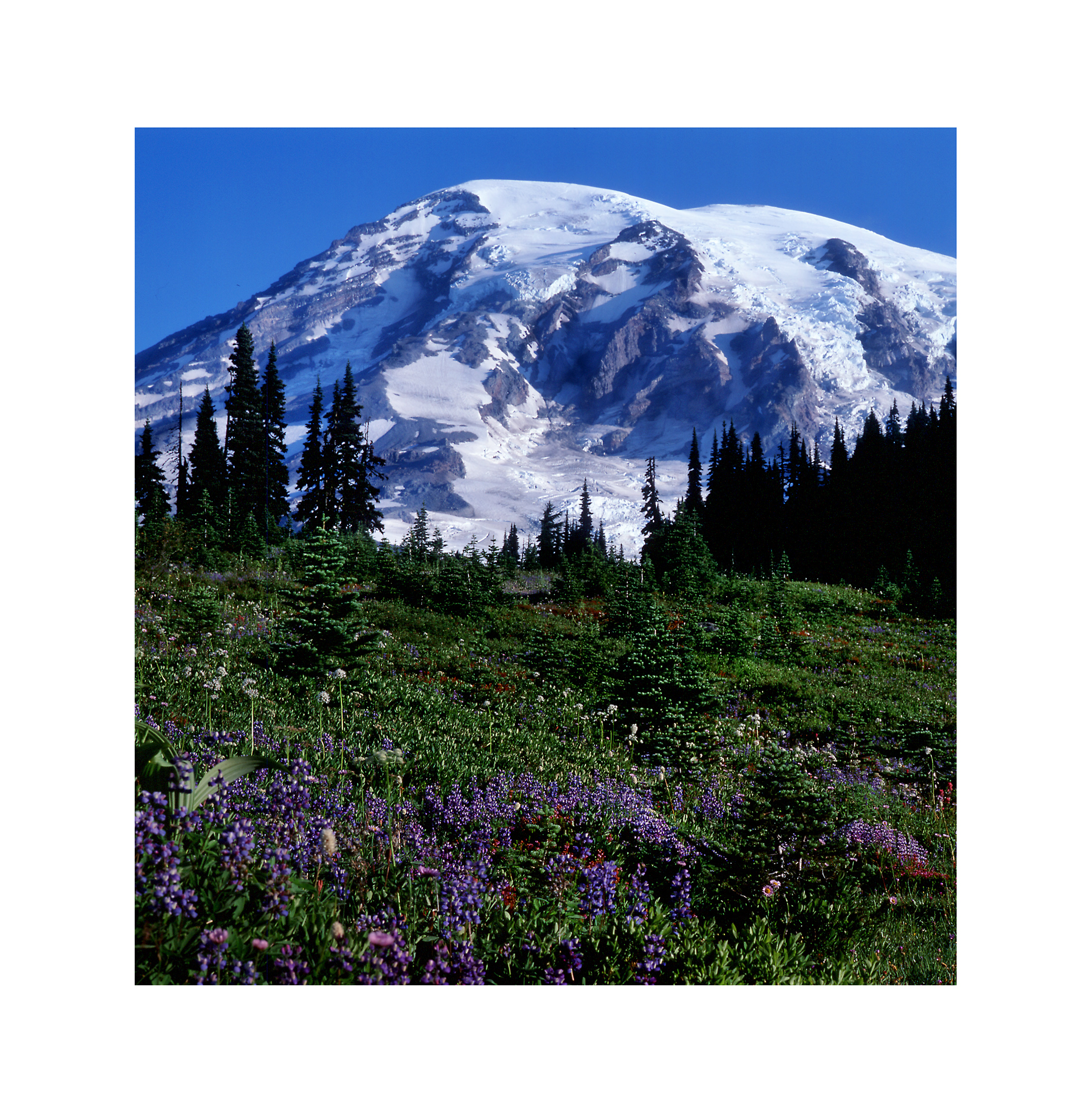 Mt. Rainier NP 06.jpg