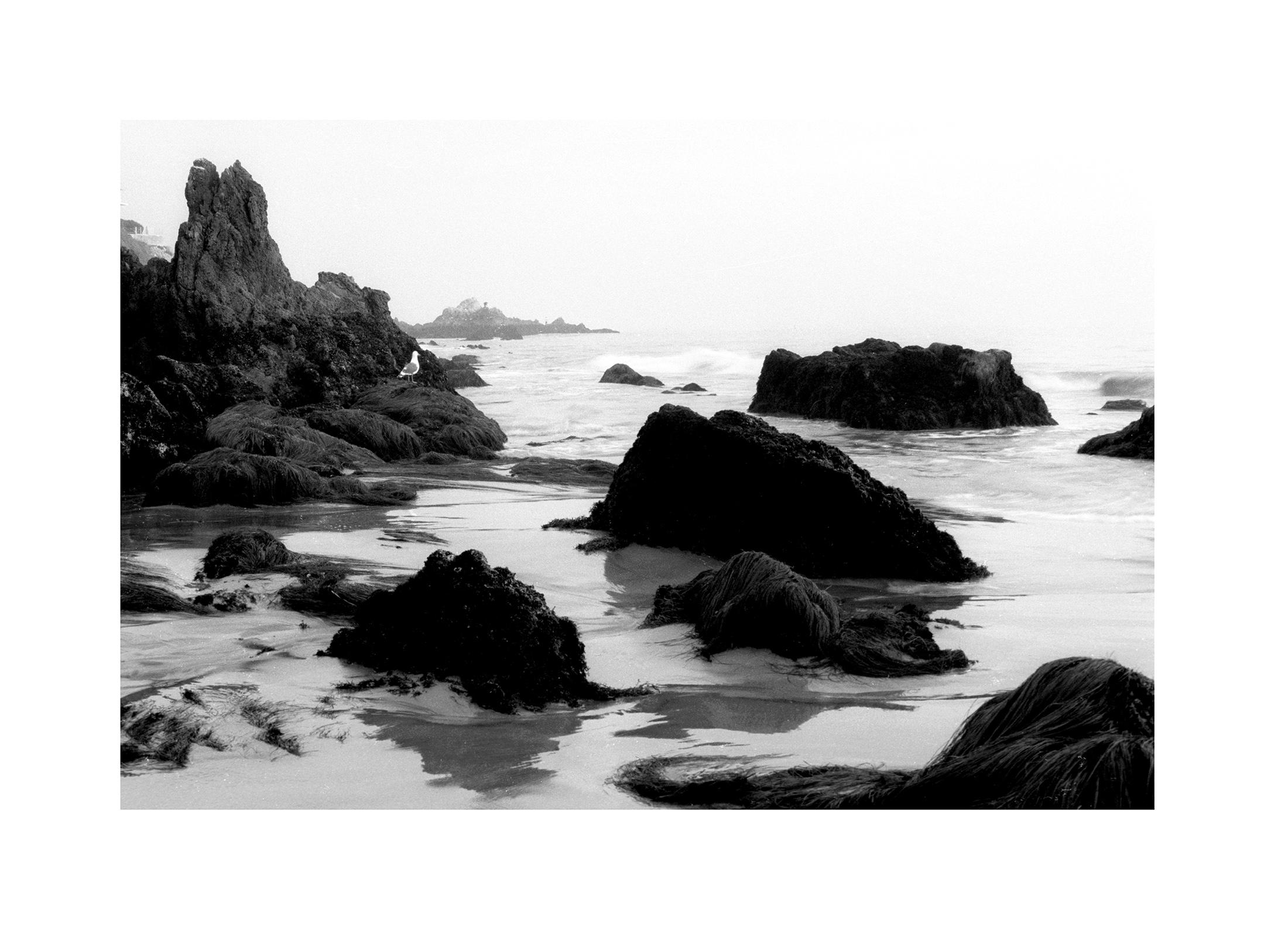 Cal Coast 08.jpg