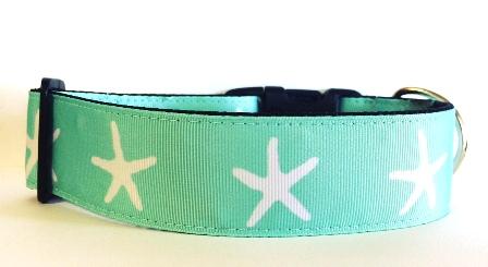 starfish wide4.JPG