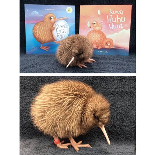 'Kuwi', the Rowi chick