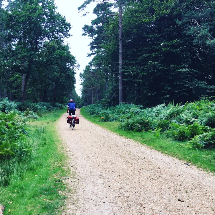 Cycle-touring through the New Forest