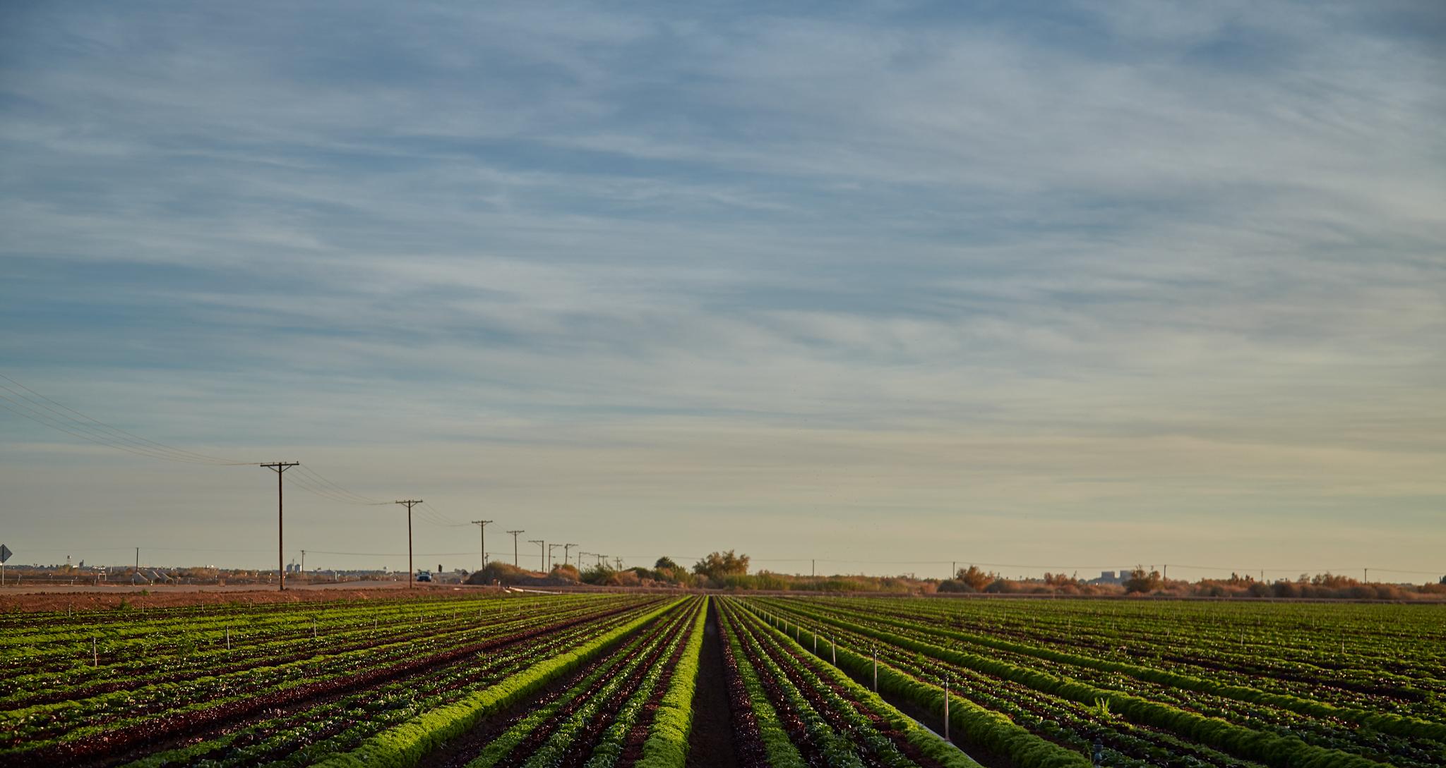 Arizona Farmland - sunset - Phoenix Editorial Photographer - Eatingwell Magazine