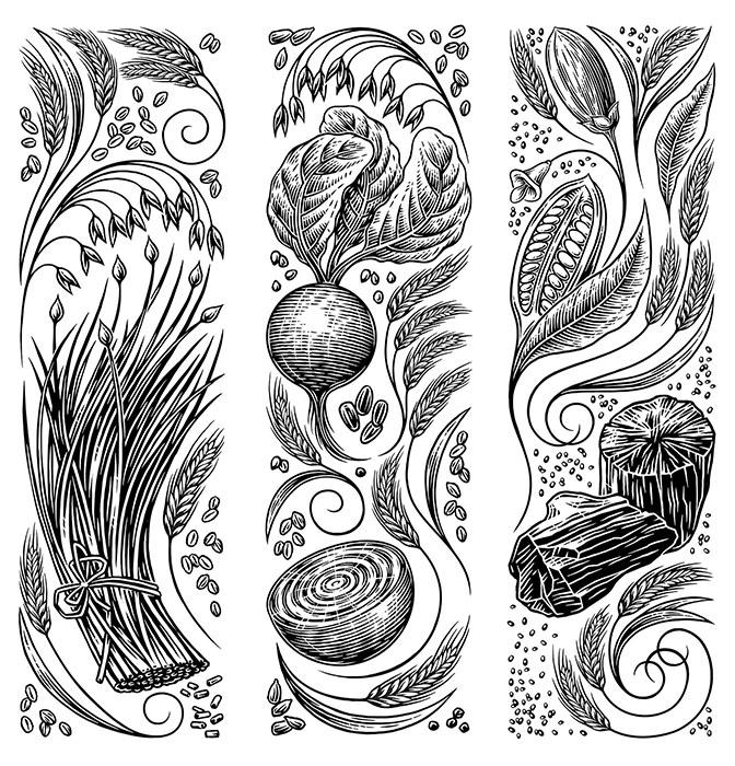 food-etching-illustrations.jpg