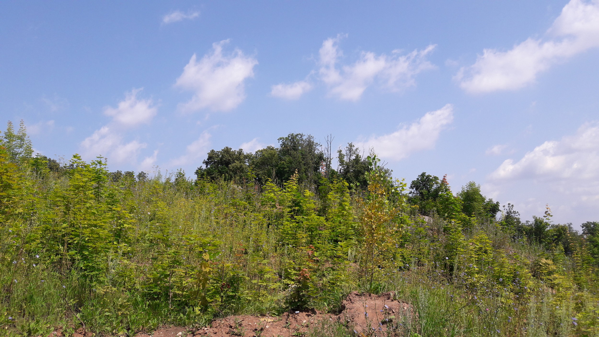 Několik pohledů na skokanský můstek, respektive jeho polohu a pozůstatky. Prvnísnímek je pořízen ve směru od lanové dráhy. Původní sportovní areál se starými skokanskými můstky je za stromy a není na snímku vidět.