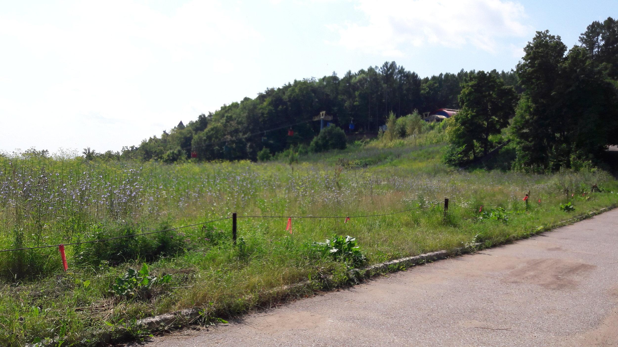 Pohled ve směru od provozní budovy sportovního areálu k horní stanici lanové dráhy. Loni snesený skokanský můstek byl někde u levého okraje snímku, přibližně uprostřed.