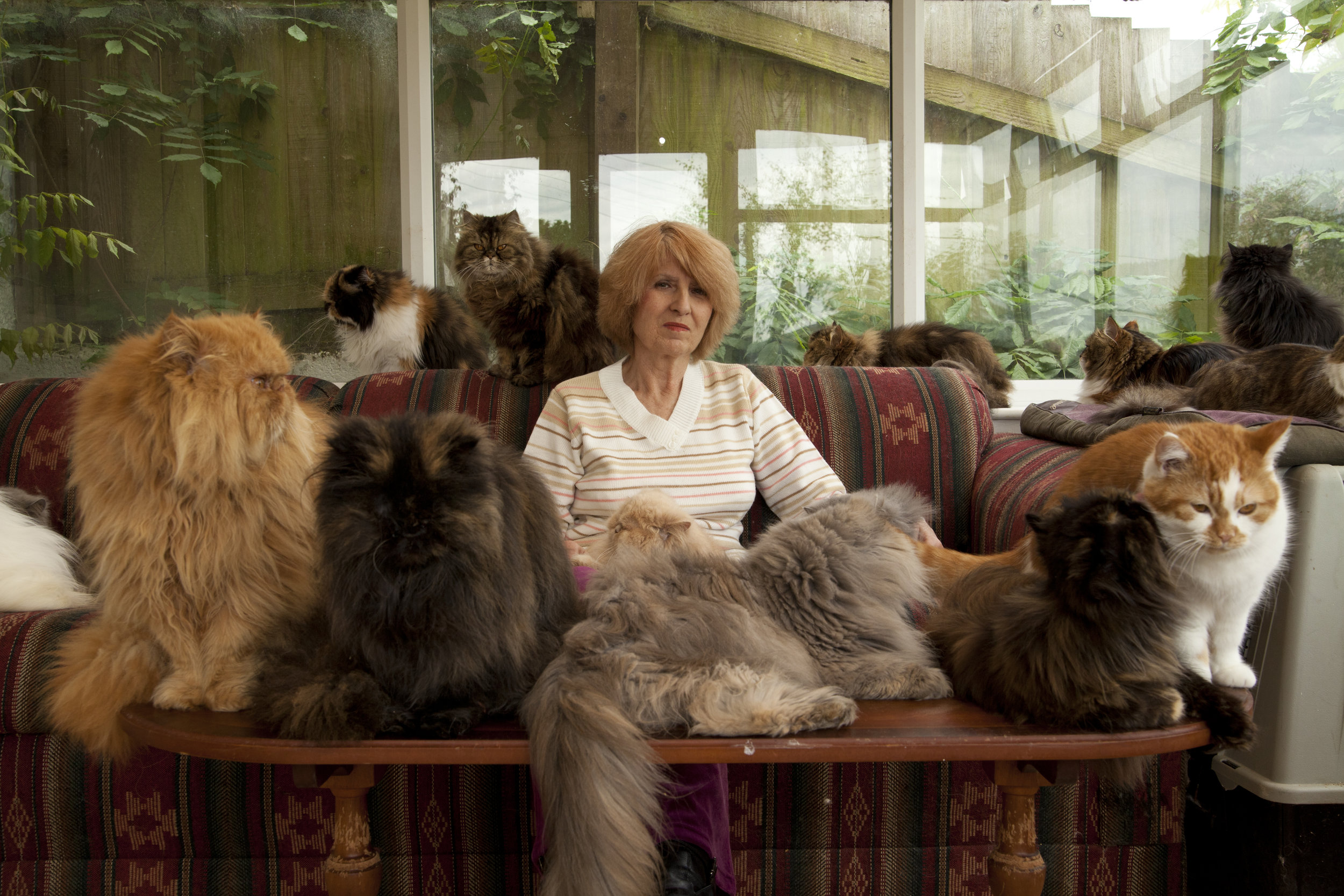 The Woman with 40 Cats, C5