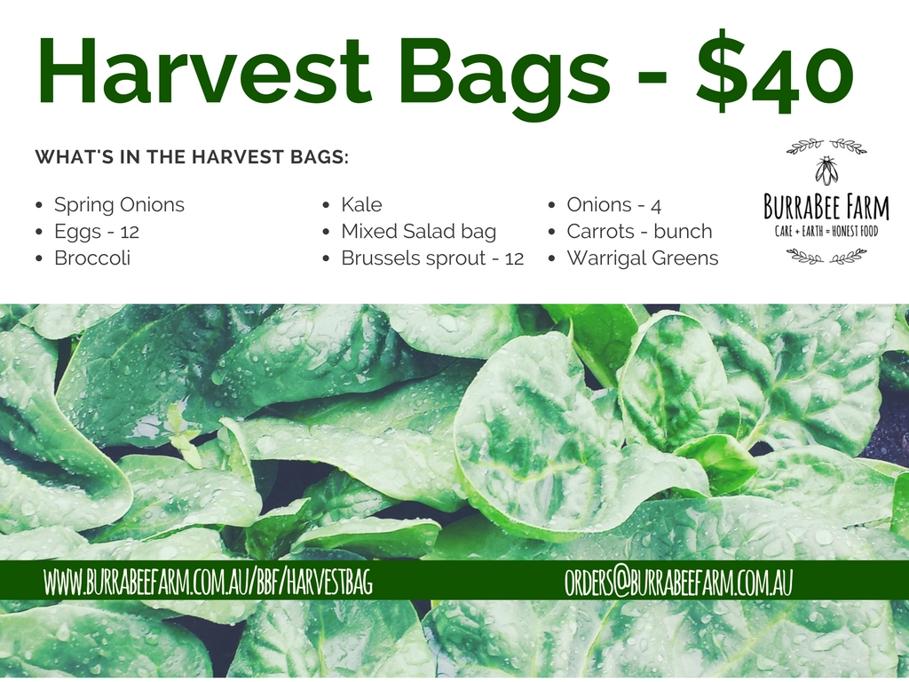 Harvest Bags - selection of delicious vegetables.  Collection at Farmers and Foodies market Friday between 3-7pm