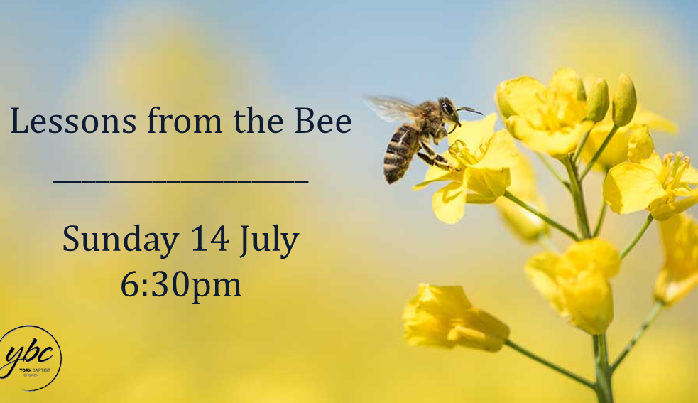 See how the wonders of the honey bee lead us to consider the wonder of God himself. We will be looking at Biblical truths as demonstrated in the amazing life and work of the bee.