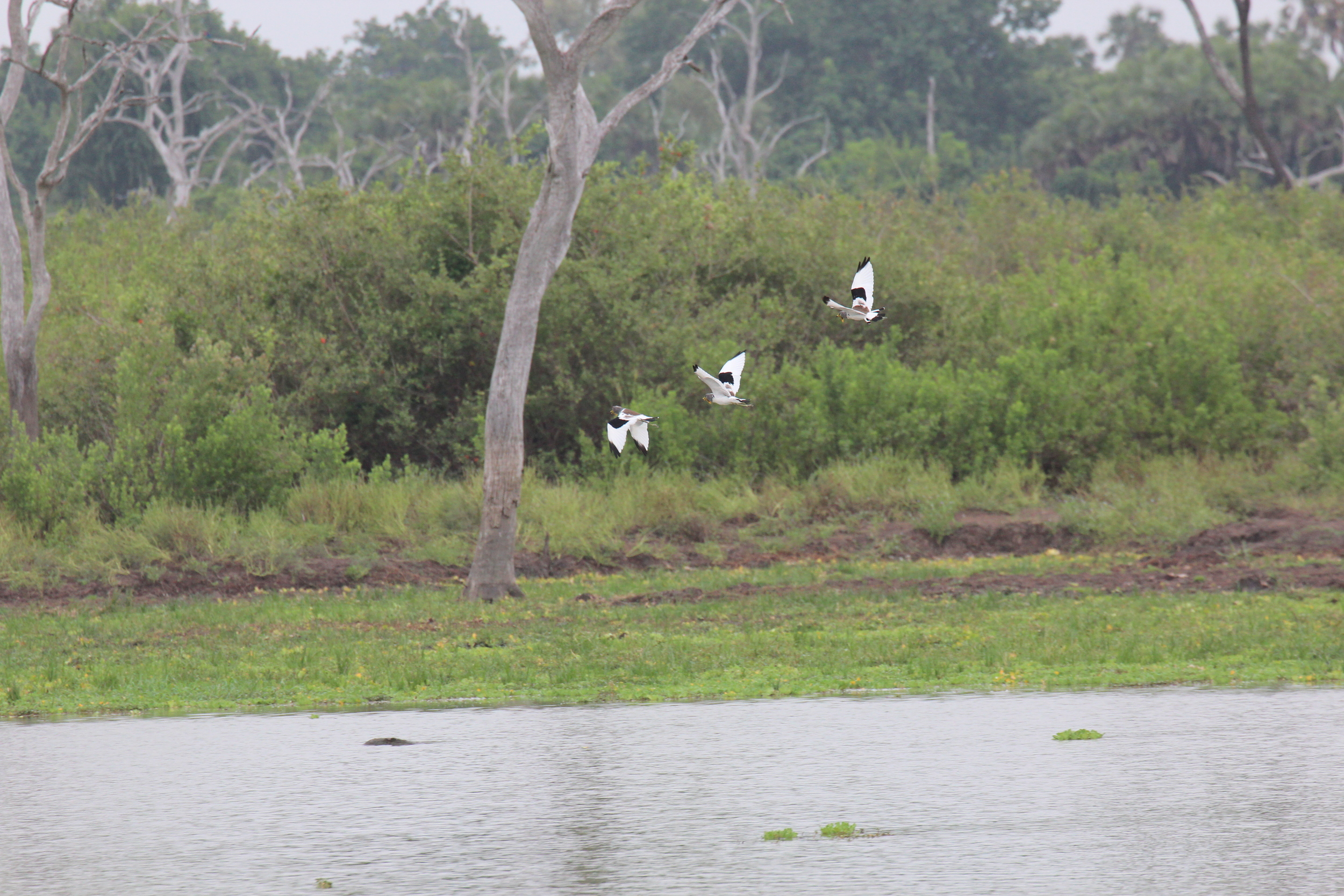 Birds flying in Selous Game Reserve in Eastern Tanzania.